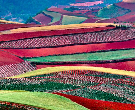 """""""政企农""""合力建设农产品区域公用品牌  推动区域经济高质量发展"""