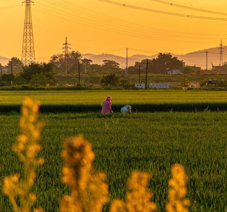 以高标准市场体系建设推动乡村产业高质量发展