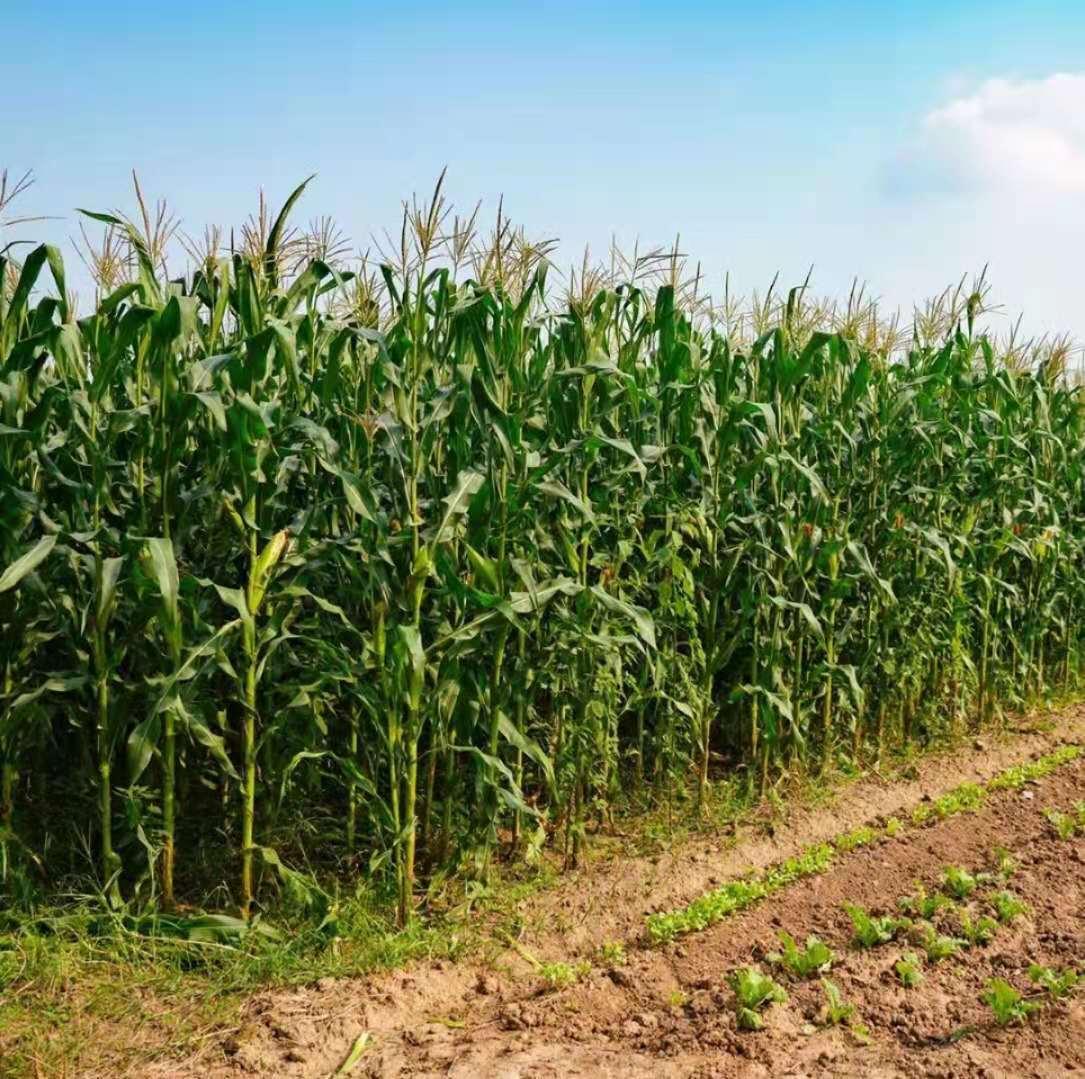社会化生态农业对乡村人才振兴的关键作用